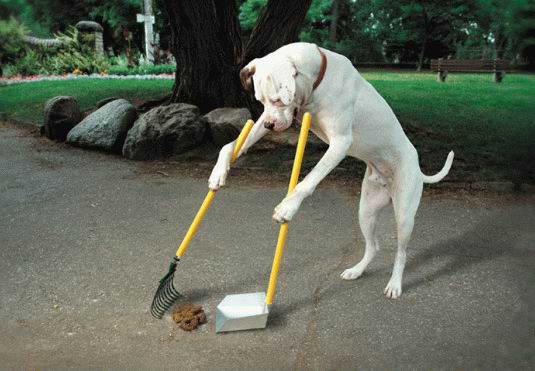 dog_humor.jpg