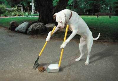dog_humor