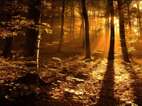 ecb35_Sun_ray_in_the_woods